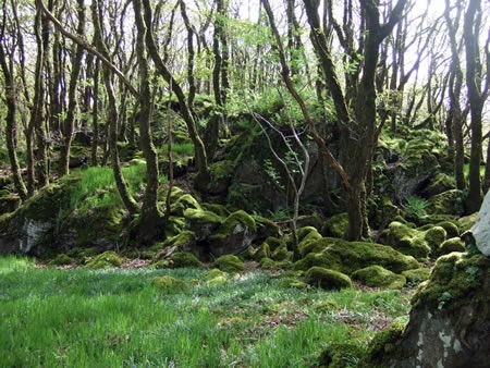 Ty Canol Nature Reserve